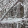 Stock Video: Winter tree branch and snow close-up