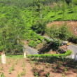 Road between tea plantations in Munnar Kerala India — Stock Video
