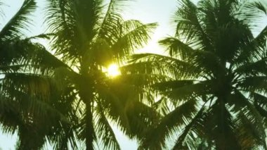 Sun is shining throgh palm leaves — Vídeo de stock