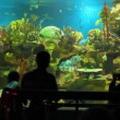 People shooting in oceanarium — Stock Video