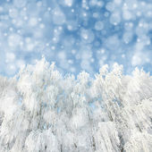 Snowfall and winter woods background — Stock Photo