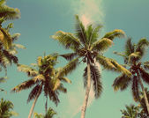 Palms under blue sky - vintage retro style — Stock Photo