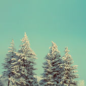 Fir trees with snow under sky - vintage retro style — Stock Photo
