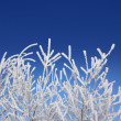 Frost winter branches under blue sky — Stock Photo