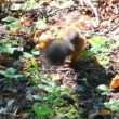 Stock video: Squirrel in park