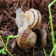 Stock Video: Snails close-up