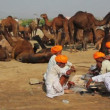 Stock Video: Sellers of camels at Pushkar camel fair