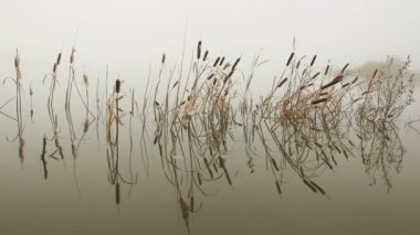 Lake in mist - stems of reeds reflected in water — Stock Video