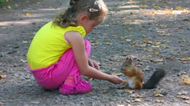 Little girl feeding squirrel with nuts in park — Stock Video