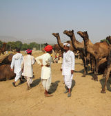 Pushkar Camel Fair - sellers of camels during festival — Stock Photo