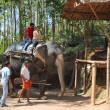 Tourists ride on elephants in jungle — Stock Photo #40354797