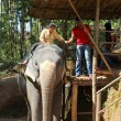 Tourists ride on elephants in jungle — Stock Photo #40354839