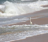White heron on beach — Stock Photo