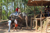 Tourists ride on elephants in the jungle — Stock Photo