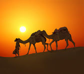 Cameleerand camels - silhouette against sunset — Stock Photo