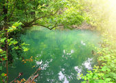 Small lake in tropical thicket — Stock Photo