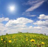 Paesaggio primaverile con fiori di tarassaco — Foto Stock