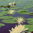 Lake with water-lily flowers - vintage retro style — Stock Photo #45336143