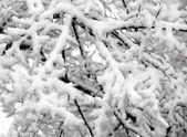 Snowy tree branches at winter — Stock Photo