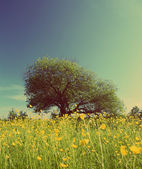 Tree on buttercups meadow - vintage retro style — Stock Photo