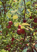 Red apples on branches - vintage retro style — Stock Photo