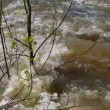 Spring flood - water flooded forest — Stock Video