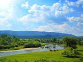 Summer landscape with river mountains and horses — Stock Photo