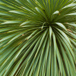 Background of palm leaves — Stock Photo
