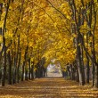 Garden walkway with picturesque autumn trees — Stock Photo