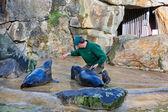 Fur seals feeding show at a Zoo — Stock Photo