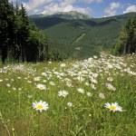 Summer landscape in Carpathians, Ukraine — Stock Photo #6987206