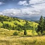 Mountains landscape in Carpathians, Ukrain — Stock Photo #7309308