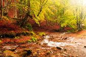 Hösten skogen — Stockfoto