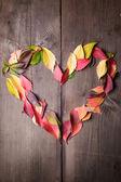 Amo l'autunno — Foto Stock