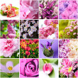 Stock Photo: Lilac and pink flowers