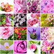 Lilac and pink flowers - Stock Photo