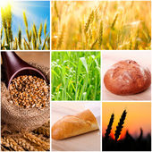 Wheat and bread — Foto de Stock