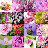 Lilac and pink flowers — Stock Photo