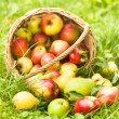 Apples and peaches on grass — Stock Photo #15373785
