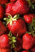 Strawberry berries — Stock fotografie