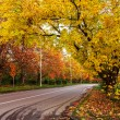 Stock Photo: Autumn landscape with road