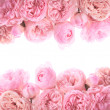 Pink roses border — Stock Photo #17198519