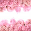 Pink roses border — Stock Photo
