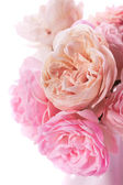 Pink roses bunch — Stock Photo