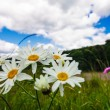 Meadow and blue sky — Stock Photo #18639435