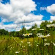 Meadow and blue sky — Stock Photo #18639523