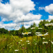 Stock Photo: Meadow and blue sky