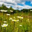 Meadow and blue sky — Stock Photo #18639549