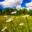 Meadow and blue sky — Stock Photo #18639559