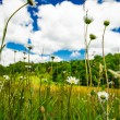 Meadow and blue sky — Stock Photo #18639585